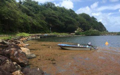 Que deviennent les projets retenus pour l'enlèvement des algues sargasses ?