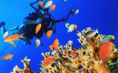 Les 4 meilleurs spots de plongée en Guadeloupe